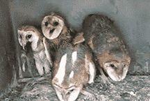 Owly Shit!
