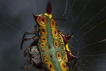pavoukovci / poznávání zástupců