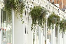 The Pimlico Road Showroom