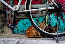 루리웹 고양이