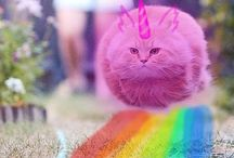 dagatt macska