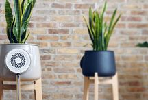 Clairy / Natural Air Purifier by Lab.Fabrici