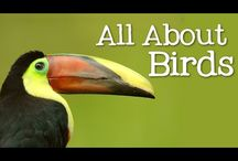 Birds video for worksheet