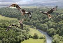 Wildlife Scotland / Scotland's wildlife
