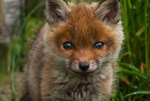 foxyly