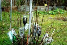 размножение черенков кустов