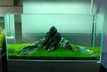 Aquascaping ontwerpen