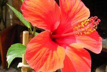 jine kvety