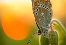 Butterflies.....:)