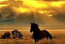 Koński Świat - Horse world