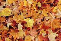 """Beauty in the Fall / """"Come, little leaves"""" said the Wind one day; """"Come to the meadows with me and play. Put on your dresses of red and gold; for summer is past and the days grow cold.""""  --George Cooper / by Brian Smith"""