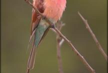 Bird paint inspirations / by Nora Machado