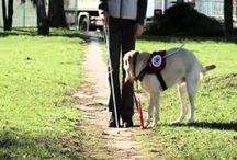 Támogassa adója 1%-val a vakvezető kutya képzést!