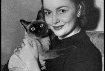 Actors &  Cats
