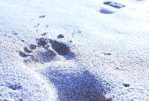 foot step