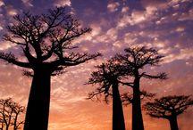 Travel~Madagascar