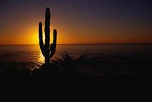 Los Cabos / by Visit Baja California Sur