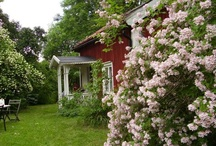 My Cottage / Inspiration and ideas for the renovation of my country cottage.