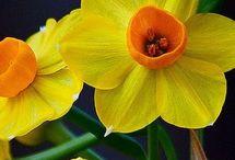 Meu jardim e arranjo flores