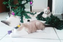 My cats - my passion >^.^<