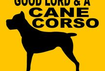 CaneCorso