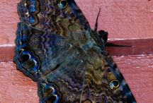 Butterflies and moths / Beautiful colors and patterns