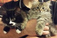 Love kitten beautiful