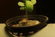 """Warzywa uprawiane hydroponicznie w twoim domu / Zobaczcie sami jak fajnie jest mieć własne warzywa, nawet jak nie ma się """"kawałka ziemi"""" - VegeTable"""
