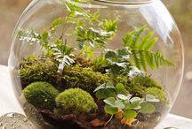 Forest Mossariums / Gardening, mossarium, moss terrarium, miniature garden