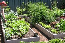Garden ideas / by Elaine Bisbee