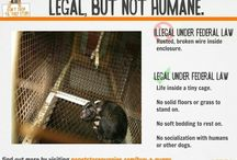 Dont breed or buy while shelter animals die!