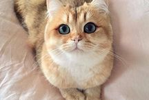 Cats / Funny and Adorable Cats and Kittens! (My favorite animal)