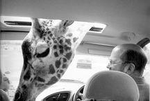 Ces animaux que j'aime / by Rosette Schalit