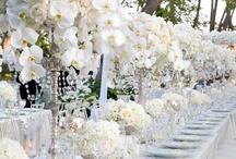 Wedding / Dream Wedding Ideas