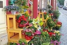Lojas de flores