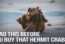 Hermit Crab DONT / These products are not safe or adequate for your crabs.