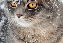 Cats in Snow & Other Cats