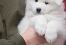 Little and cute dogs