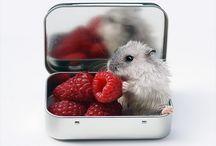 Hamster♥