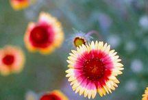 Gardening / by KellyAnn Florian