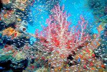 Sea Life II