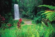 Tropical North Queensland Venues / by Cairns Wedding Planner