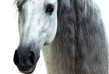 Cavalos e  Gado Bovinos