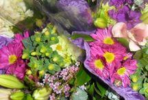 Julie's Garden Blog Pictures