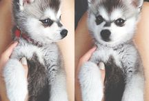 Dogs / cutest thing evevrrrr