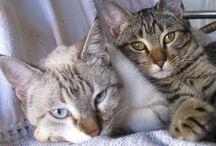 Gats / Gatos que eu amo !