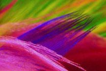 The beauty of rainbow colours