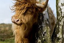 Animals in Scotland / This board explores the diversity on animals around Scotland.