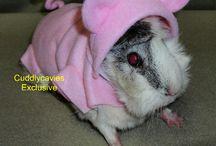 Guinea pig DIYs