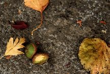 Fall Inspiration / by Kristy Harris